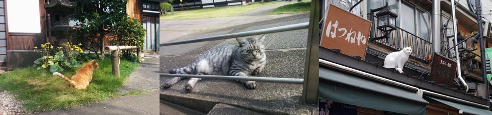 03_千駄木の猫